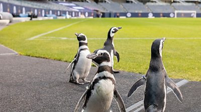 penguins at soldier stadium
