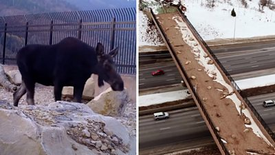The overpass was built to help animals cross between two mountains while avoiding highway traffic.