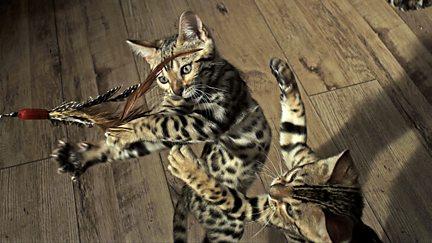 Playful Creatures