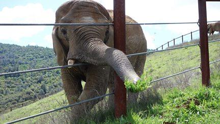 Circus Elephant Rampage