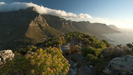In pictures: Cape