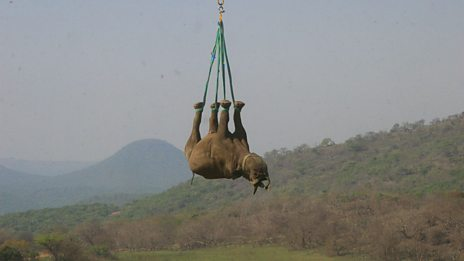 Rhino Rescue: Behind the scenes at filming