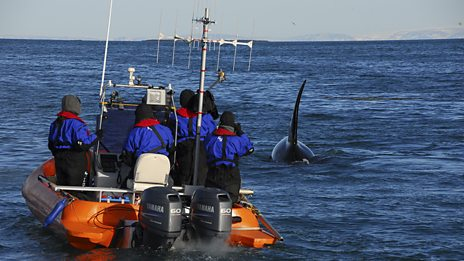 Killer Whales: Behind the Scenes