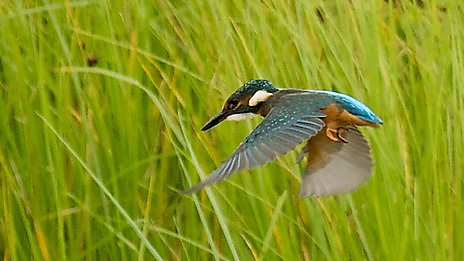 blog-kingfisher.jpeg