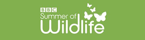 BBC Summer of Wildlife