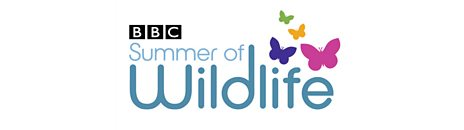 Summer of Wildlife