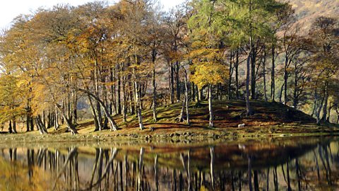 Image for John Beattie: Super Stories...Scotland's National Tree