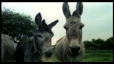 Image for Donkey Craze
