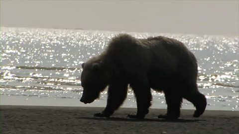 Image for Johnny Kingdom's first sighting of a brown bear