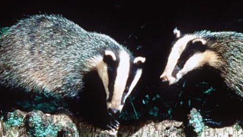 Image for And the definition of Badger's Mount is?