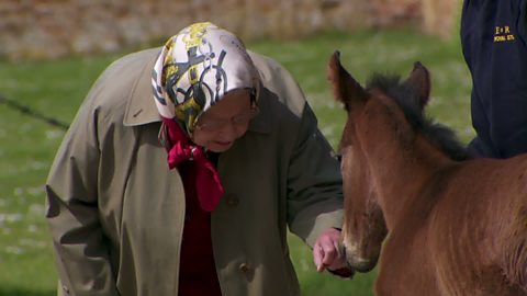 Image for The Queen visits recently born foals at Sandringham