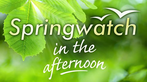 Image for Springwatch in the Afternoon Sound Quiz - 28th May