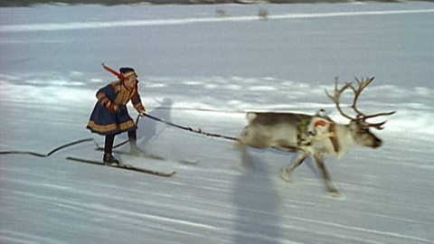 Image for Reindeer Racing in Lapland