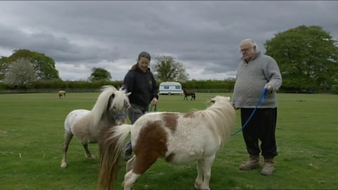 Image for Miniature Horses