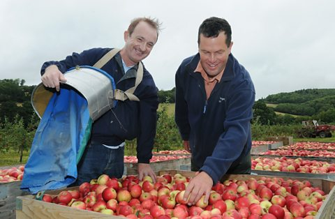 Steve and John, the foreman, with their harvest of Discovery apples