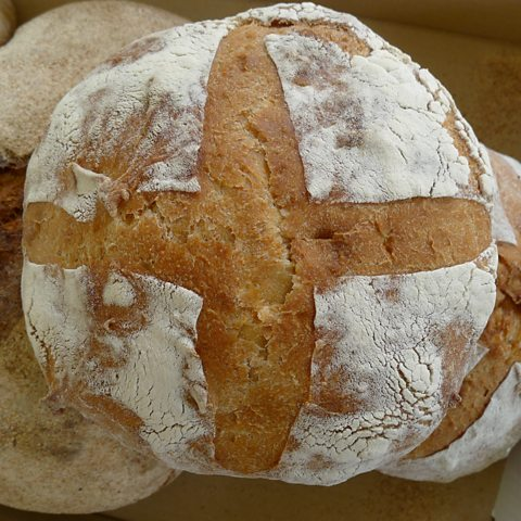 A close-up of the ale barm 'Manchet'