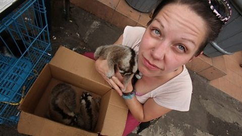 Primatologist Anna Nekaris with Loris in illegal market