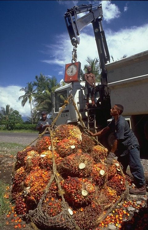 Oil Palm Fruit Bunches