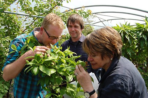 Mark Diacono, Martin Crawford and Sheila Dillon with the Carolina allspice plant