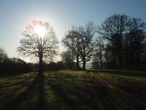 Sunrise in Sandleford Park, Berkshire