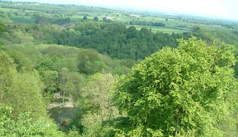 The view across Hackfall Wood