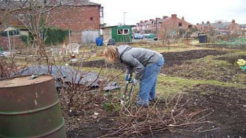 Pruning on the allotment