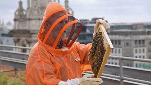 George McGavin inspects bees on London rooftop