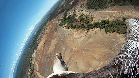 Bird's-eye view from a vulture in flight