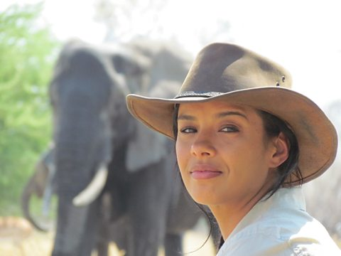 Botswanan elephants with remarkable memories