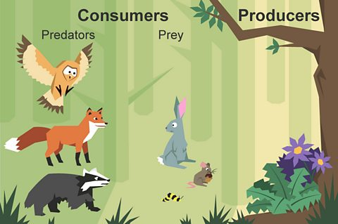 BBC Bitesize - What is a food chain?