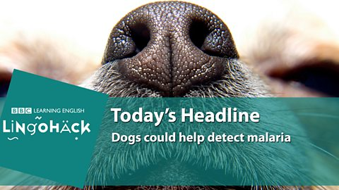Dogs could help detect malaria