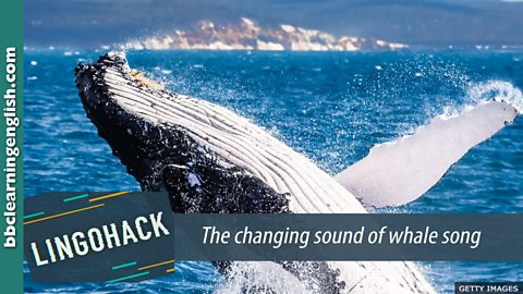 The changing sound of whale song