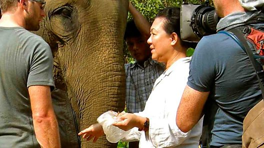 "Khyne U Mar is affectionately known as ""The Elephant Lady of Burma"". As a trained vet, Khyne has spent years studying captive working elephants within Myanmar (Burma) and throughout Southeast Asia."
