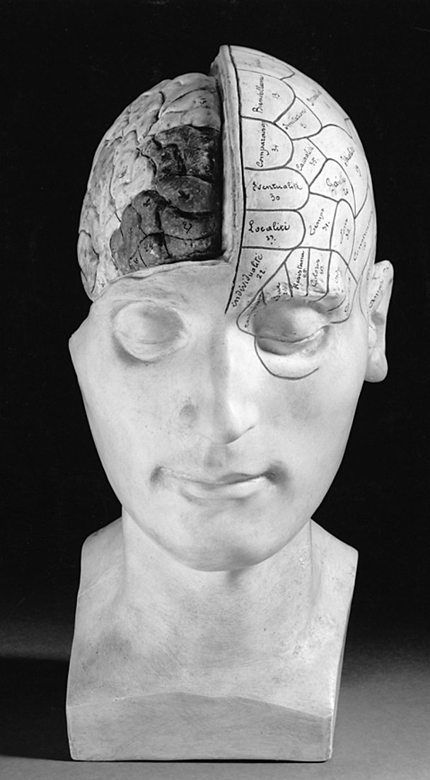 Plaster cast phrenological head with part of the cranium cut away to show the brain.