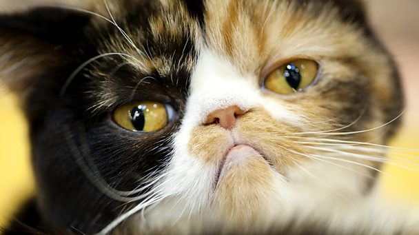 Close up face shot of an unhappy looking cat.