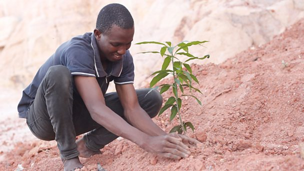 Man plants tree