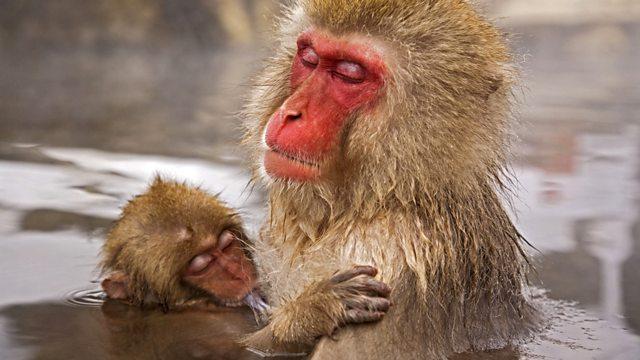BBC Life - E10 - Primates