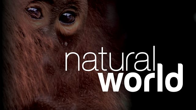Image for Natural World