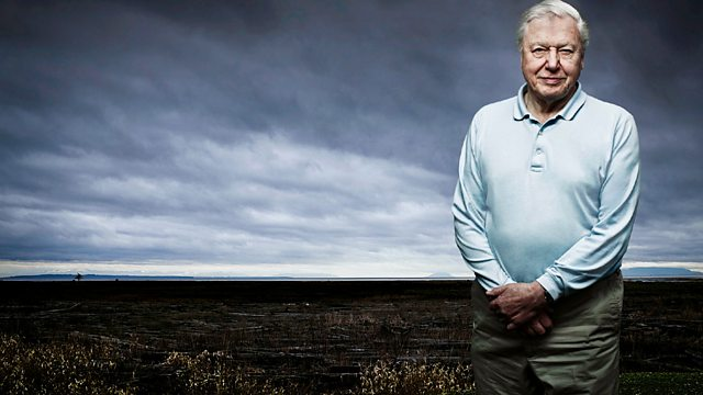 Image for David Attenborough's Life Stories