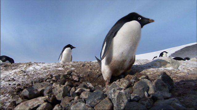 Criminal penguins