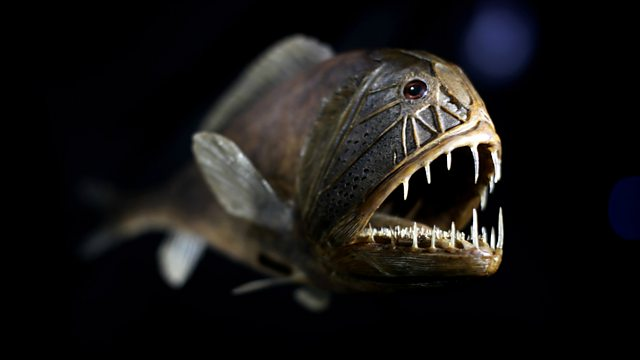 Bbc world service newsday what sound do deep water fish for What sound does a fish make