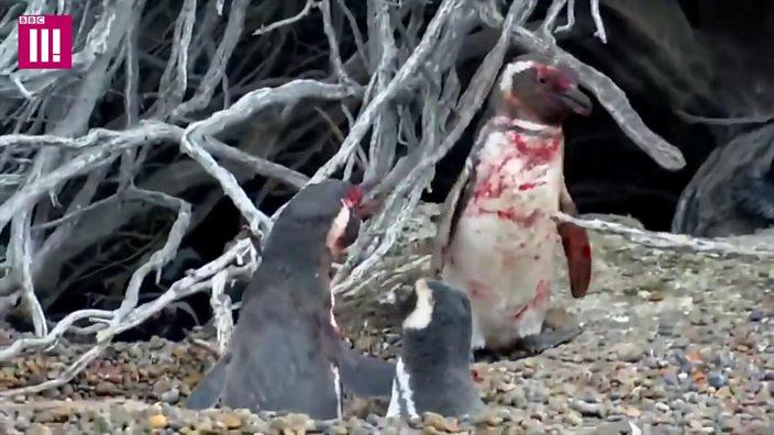 Penguins; The dark side thumbnail