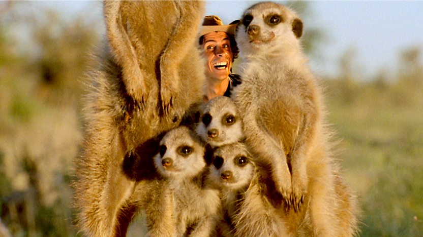 Andy's Wild Adventures: Series 1: 4. Meerkats on BBC iPlayer