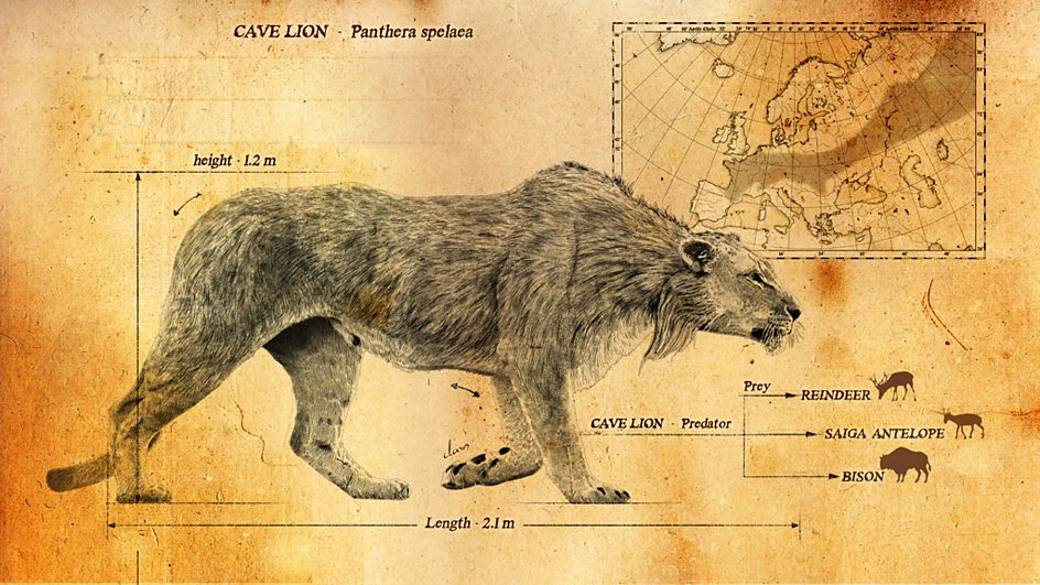 Lion Man Cave Art : Bbc two ice age giants in pictures the