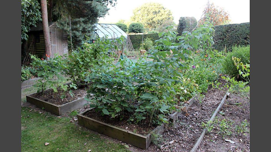 Bbc radio norfolk the garden party vegetable patch for Garden vegetable patch