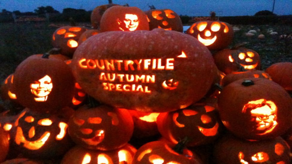 Autumn Pumpkin Carving Break The Pumpkin Carving