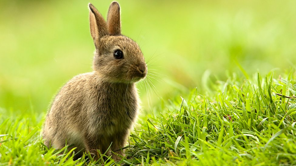 bbc radio 4 drama watership down animals in literature the