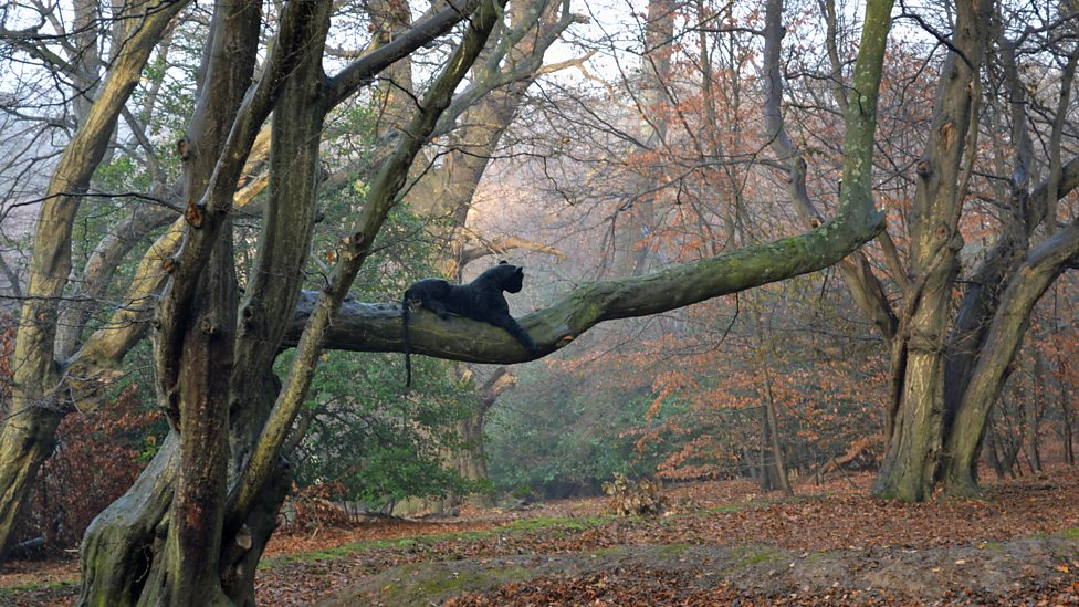 """The """"Epping panther"""" cuddly toy (Credit: City of London / Christine Brassey)"""