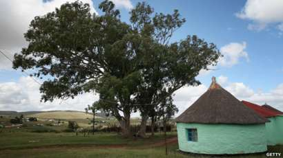 Gum trees and hut at Mqhekezweni