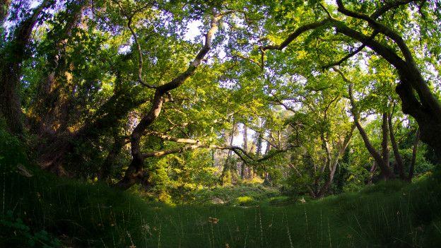 La verdadera historia del jard n del ed n ecuavisa for Jardin querubines
